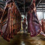 Souffrance animale: comment changer les méthodes des abattoirs
